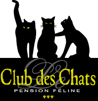 Pension pour chat, Pension féline à Lille, 59, 62